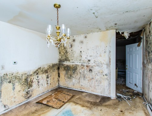 One Of The Worst Things A Homeowner Has To Deal With Is Mold Become Scourge Modern World As It Takes Advantage Way We Heat Our